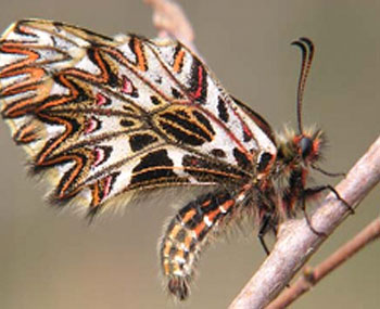 template-farfalle